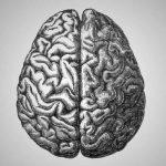 7° Convegno Nazionale FISTQ – Il cervello mare dei midolli e la psiche oceano della vitalità